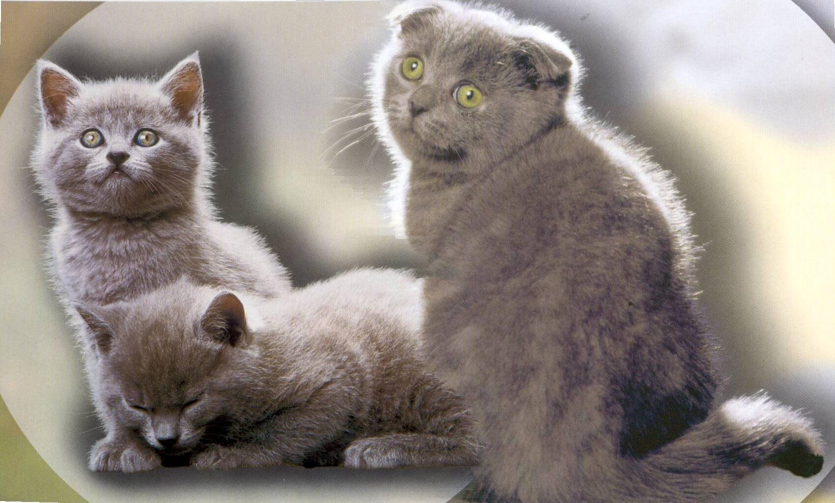 Evcil Hayvan Hastalıkları Teşhis ve Tedavi Merkezi